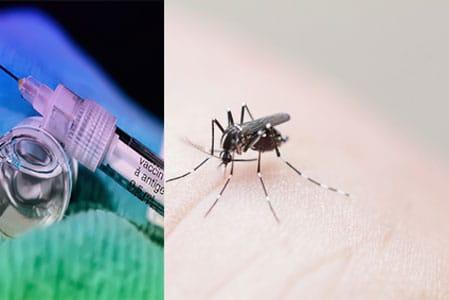 chikungunya vaccin