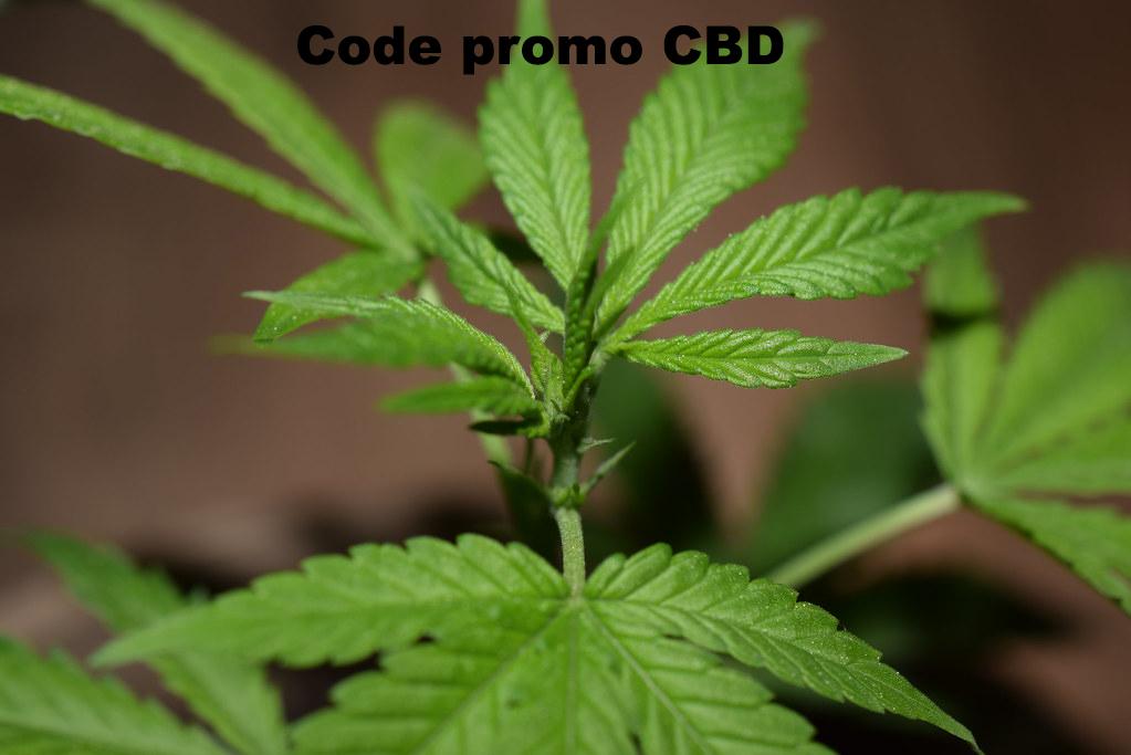 Code promo CBD